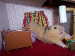 Stretching Hamster