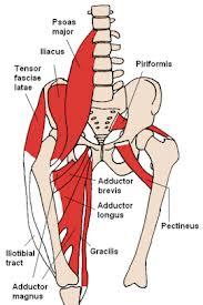 Muscles of Pelvis 2