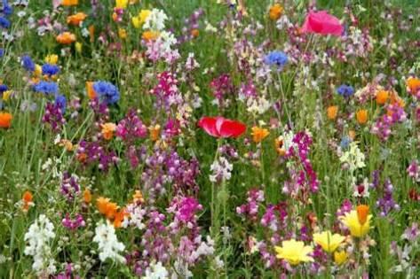 Wild Gardens Wild Flowers