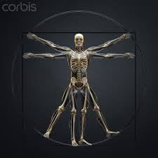 Skeleton Vitruvian Man