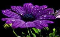 Flower Patience 2