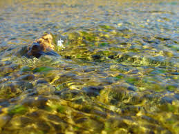 River Flow 1