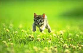 Running Kitten 1
