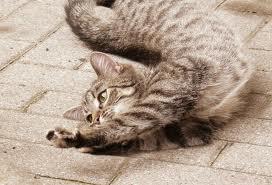 Stretching Kitty